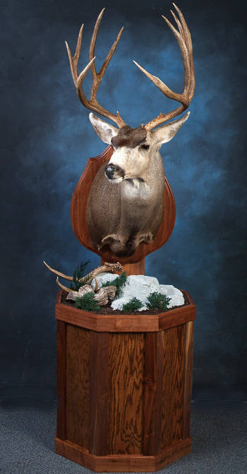 Artistic Wildlife Studio, New Mexico Taxidermy, Mule Deer Mounts, elk taxidermy, fish, taxidermist art